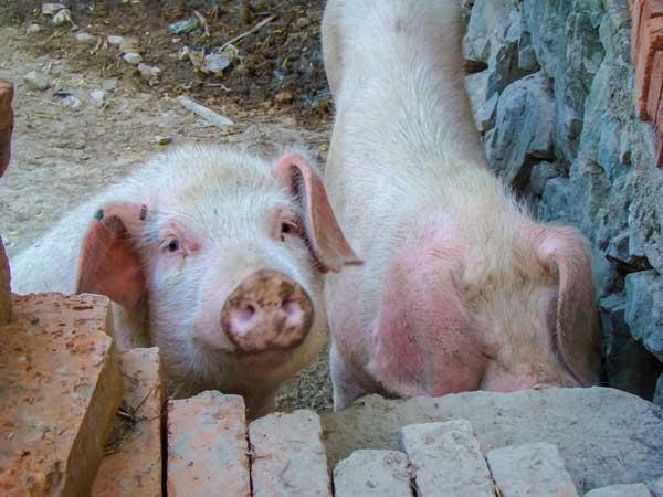 银保监会召开支持生猪稳产保供座谈会
